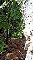 Rumanian Forest, Carpatos Mountains 6.jpg