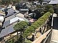 Ryuzen-no-matsu pine tree on Tonooka Hill on Itsukushima Island.jpg