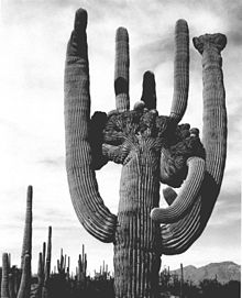 cactusの意味 使い方 英和辞典 weblio辞書