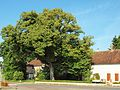 Sainpuits-FR-89-arbre-01.jpg