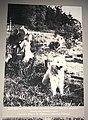 Salish dog 02 - 1922.jpg