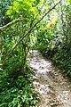 Samaná Province, Dominican Republic - panoramio (150).jpg