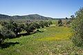 San Pasqual Valley.jpg