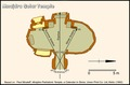 Schematic Angles in the Mnajdra solar temple.tif
