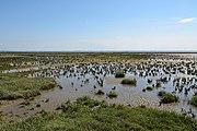 Schleswig-Holstein, Neufelderkoog, Biosphärenreservat Schleswig-Holstein Wadden Sea and adjacent areas NIK 7199.jpg