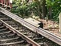 Schliemannstraße, S-Bahn Hamburg, WPAhoi, Hamburg (P1080246).jpg