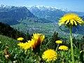 Schwyzer Land.jpg