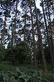 Sczanieckiej Street - forest 1.jpg