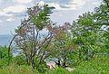 Sea Garden-Burgas (3).jpg