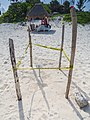 Sea turtle nest tulum mexico (21362831166).jpg