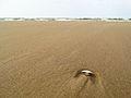 Seashell (14679622617).jpg