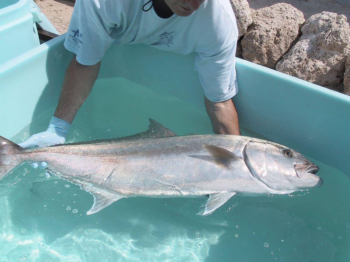 Broodstock wikipedia for Fish farms in florida