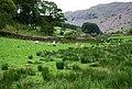 Sheep grazing near Doctor's Bridge - geograph.org.uk - 1334022.jpg
