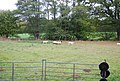 Sheep in a field - geograph.org.uk - 1544449.jpg