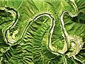 Shimanto River incised meander Aerial Photograph.jpg