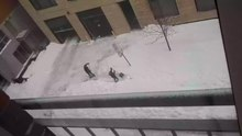 File:Shoveling-snow-removal-pelleter-neige-deneigement-2012-12-29.webm