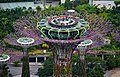 Singapore Gardens by the Bay viewed from Marina Bay Sands 10.jpg