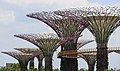 Singapore Supertree-Grove-in-The-Gardens-01.jpg