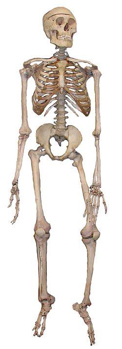 ben i kroppen