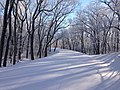 Skyland Drive Covered In Snow (12224962583).jpg