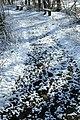 Sneeuw in Meerdaalbos - 372801 - onroerenderfgoed.jpg
