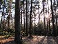 Solnedgång på skogsstig, Göteborg 2011 - panoramio.jpg