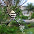 Spider macro.jpg