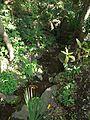 Spring (湧水) by Ruin of Inari Shrine (稲荷神社址) - panoramio.jpg