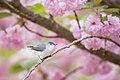 Spring Gnatcatcher (Unsplash).jpg