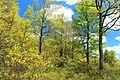 Spring Leaf-Out (2) (14270486832).jpg