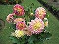 Srinagar - Nishat Mughal Gardens 02.JPG
