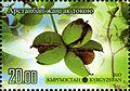 Stamps of Kyrgyzstan, 2013-05.jpg