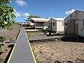 Starr-091221-0749-Cordia subcordata-habit with camp and new volunteer hut-Honokanaia-Kahoolawe (24874537282).jpg