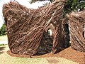Starr-111003-0356-Fraxinus uhdei-branches turned into art display-Hui Noeau Makawao-Maui (24491117813).jpg