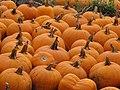 Starr-111004-0583-Cucurbita pepo-pumpkins-Kula Country Farms-Maui (25092061286).jpg
