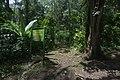 Start of Mahoma Trail in Rwenzori Mountains.jpg