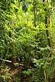 Steenbergse bossen 32.jpg