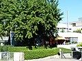 Stellmacherhaus Thomas-Bornhauser-Strasse 1020021.jpg