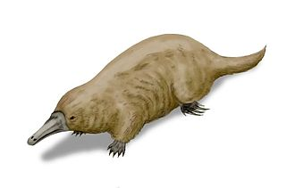 Platypus - Reconstruction of ancient platypus relative Steropodon