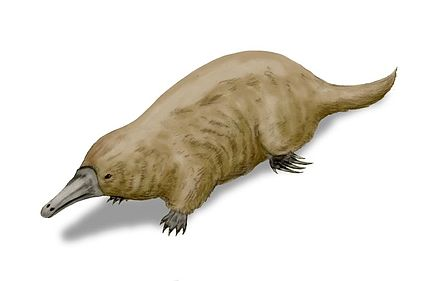 Reconstruction of ancient platypus relative Steropodon Steropodon BW.jpg