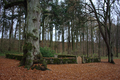 Stockhausen Herbstein ConradsRuhe Friedhof Riedesel.png