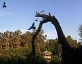 Stivu Lagon kun pagodo, kolomboj kaj la Moonjpg.jpg
