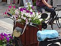 Street Scene with Motorcycle and Flowers - Shkodra - Albania (42587894881).jpg