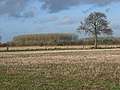 Stubble, Landmead Farm - geograph.org.uk - 290119.jpg