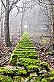 Stufen Wolfstein Pfalz.jpg