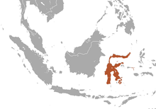 Sulawesi Naked-backed Fruit Bat area.png