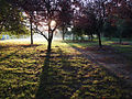 Sun Rise Light, UC Davis, by photographerpandora.jpg