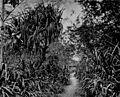 Sylvan groves round Taiwanfu.jpg