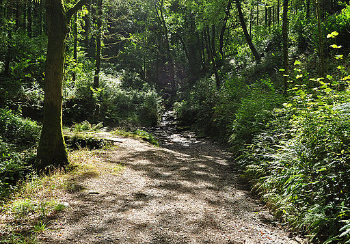 Tamar Valley Discovery Trail in Greenscombe Wood