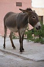 Tamraght-daleharvey-10-donkey.jpg